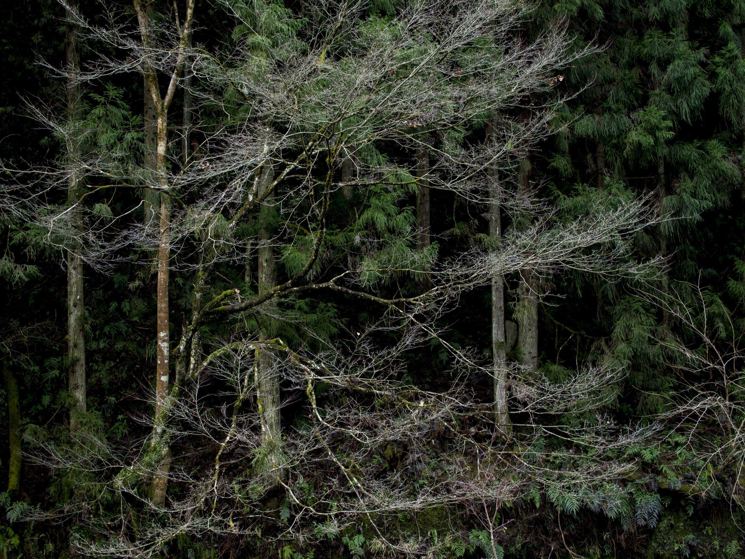 The Philosopher's trail Kyoto. EM5 25mm lens