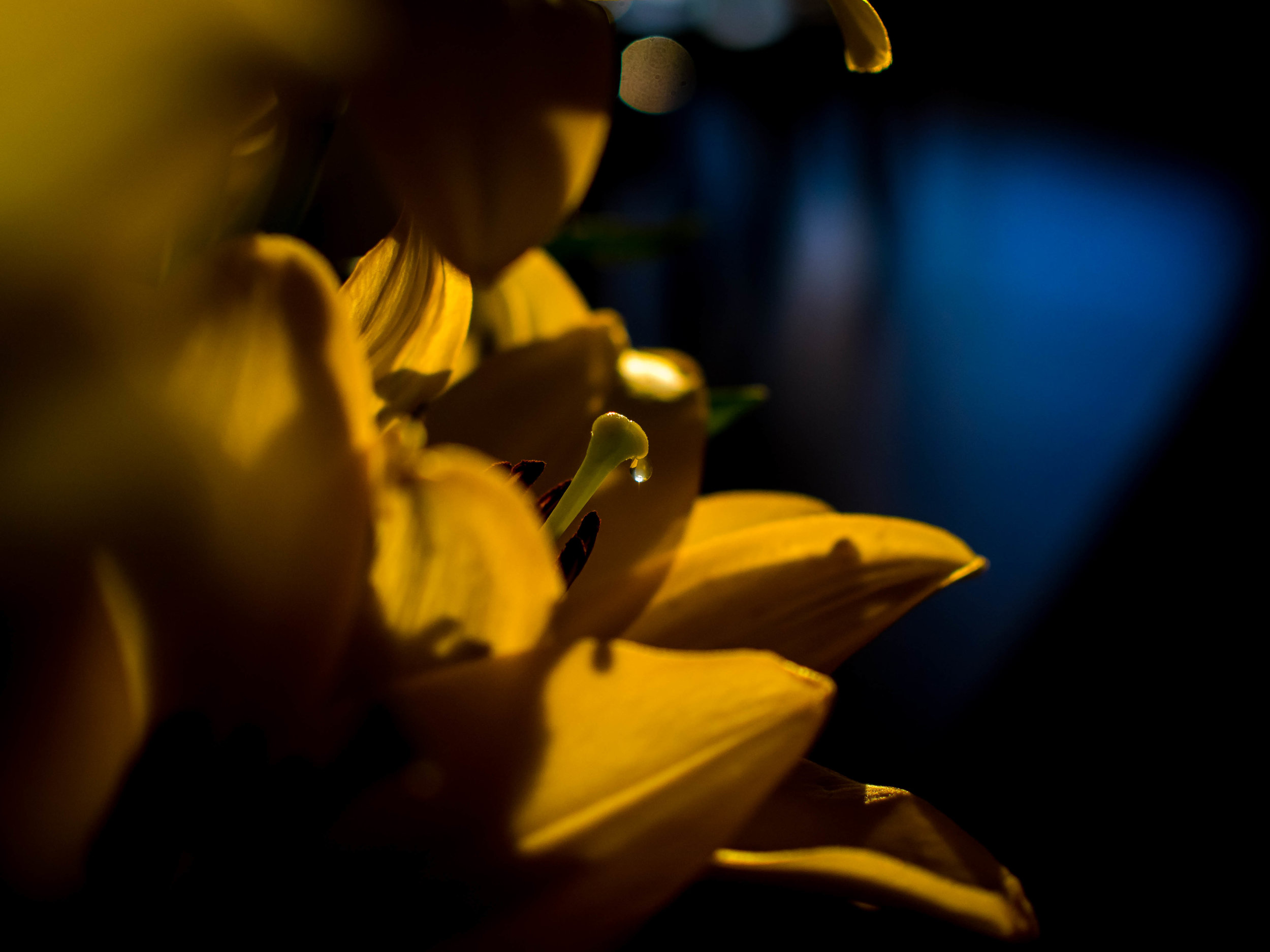 Another example of Bokeh being an important element in a shallow DoF image. Poor Bokeh can effect the strength of an image. The only way to really know is to try out your lenses and compare their effects. If it feels/looks right, then go with it.