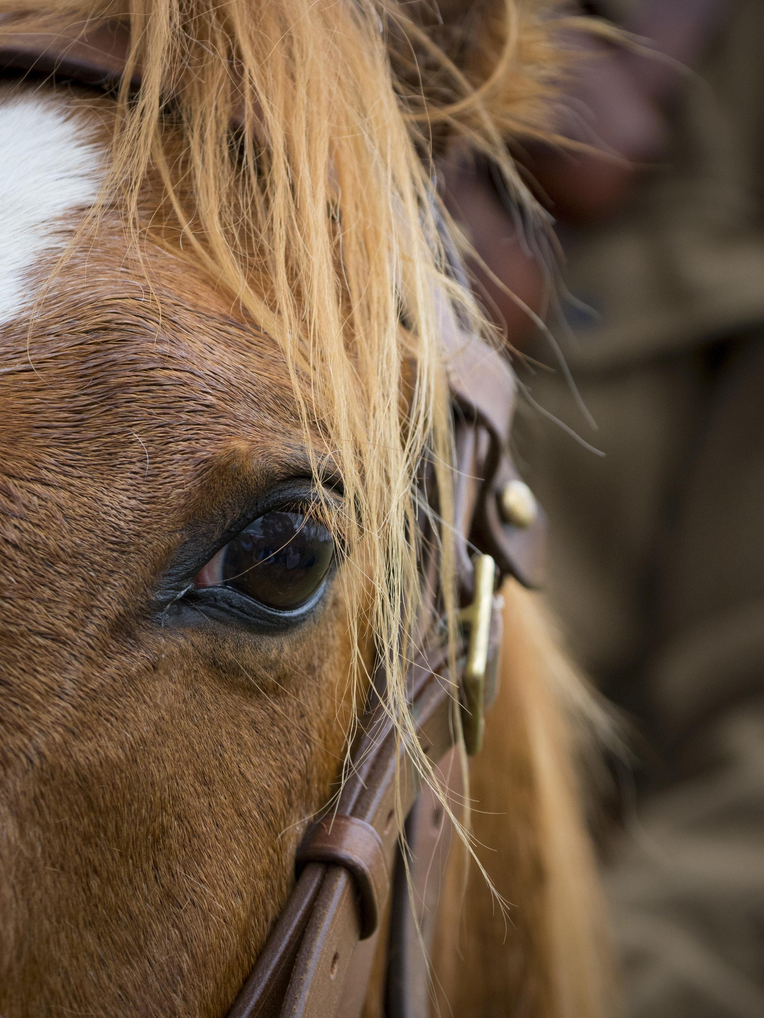 Light Horse Veteran, Sheffield Tasmania.