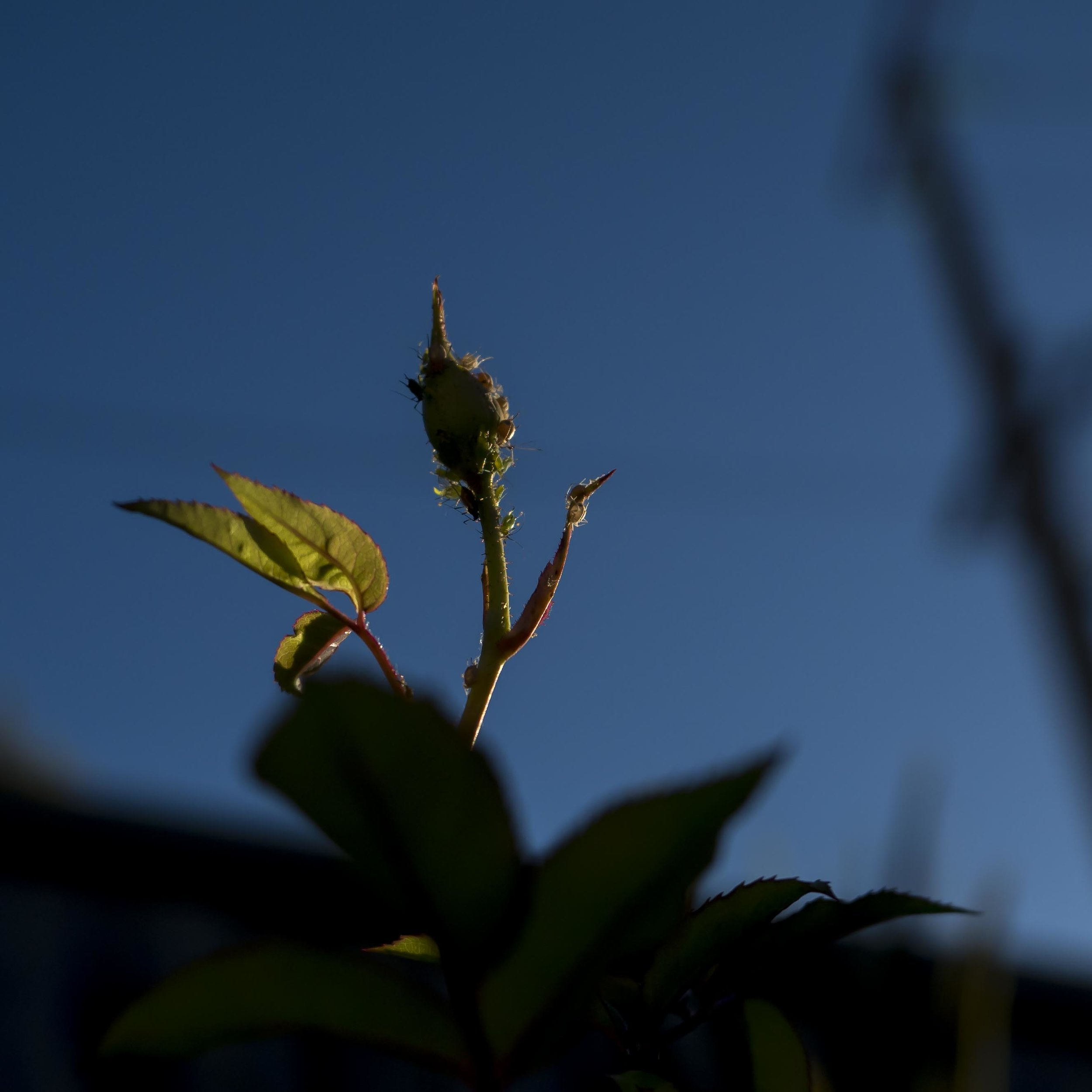 EM1 (fully embraced), 12-40 and Autumn light