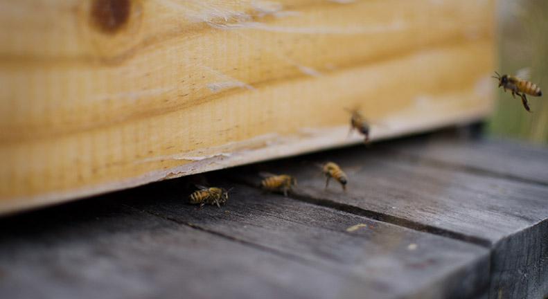 Slider_Landscape_Bees.jpg