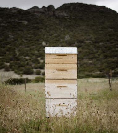 Slider_Portrait_Bees.jpg