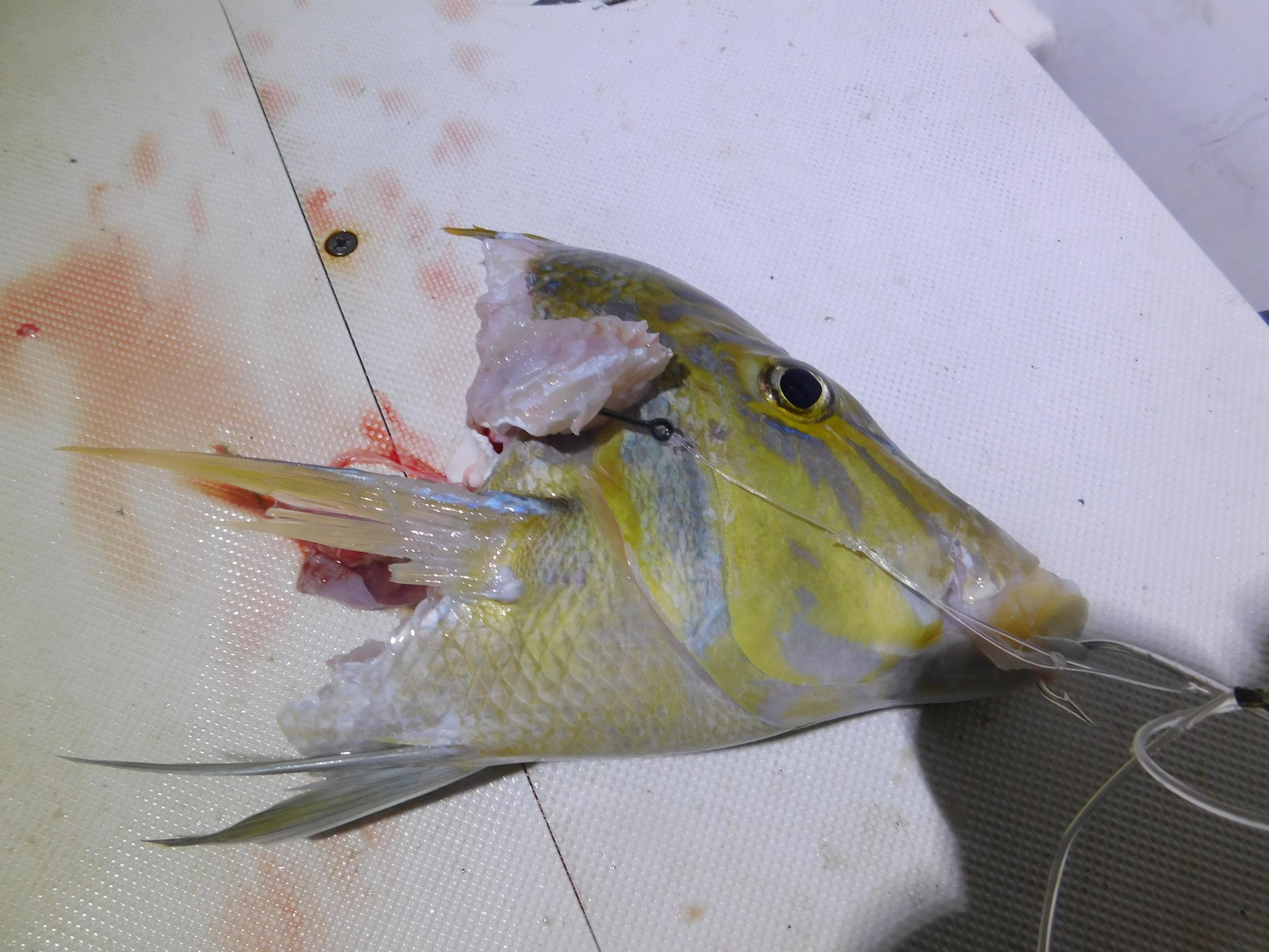 night fish 010.JPG