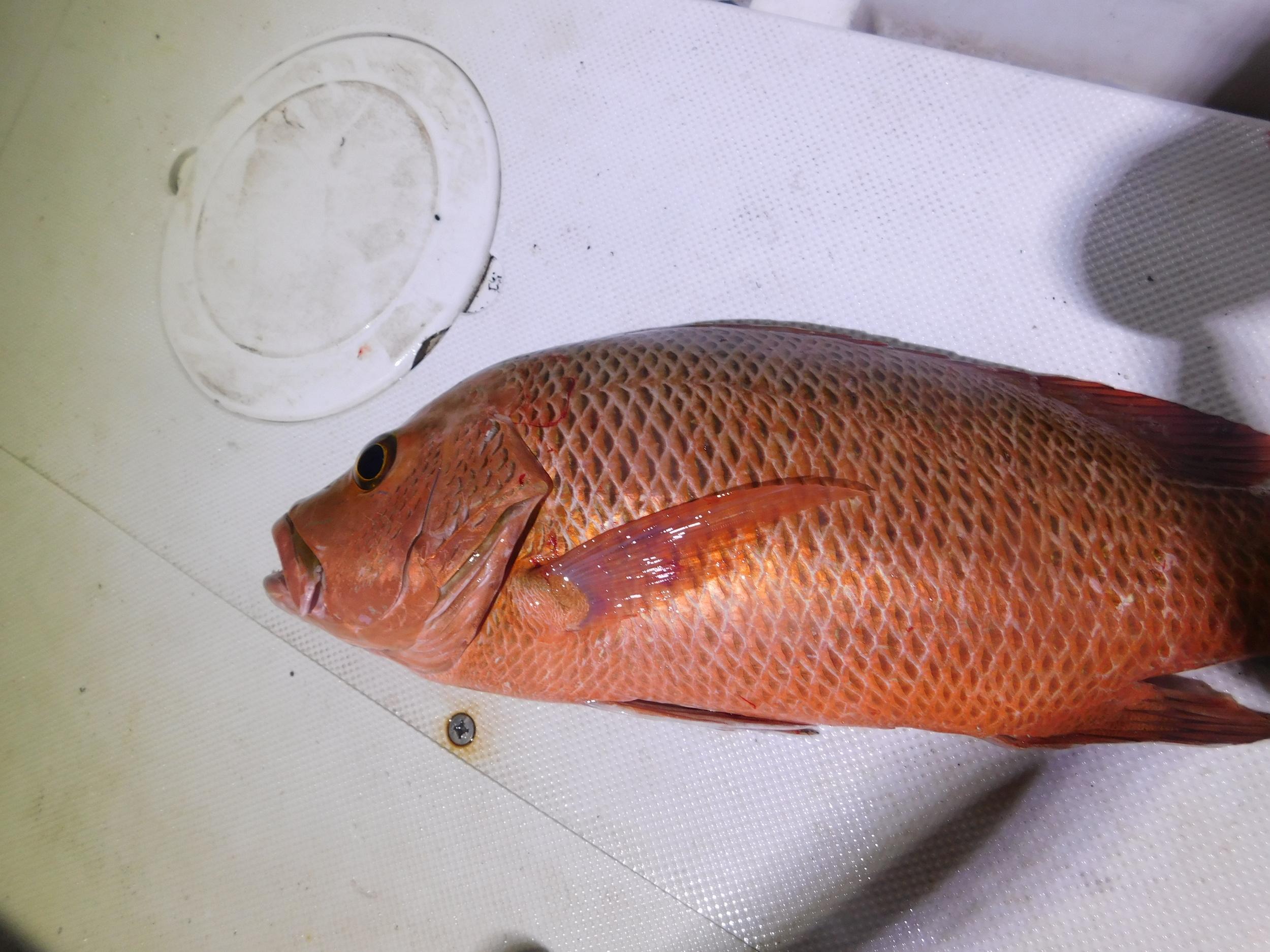 night fish 004.JPG