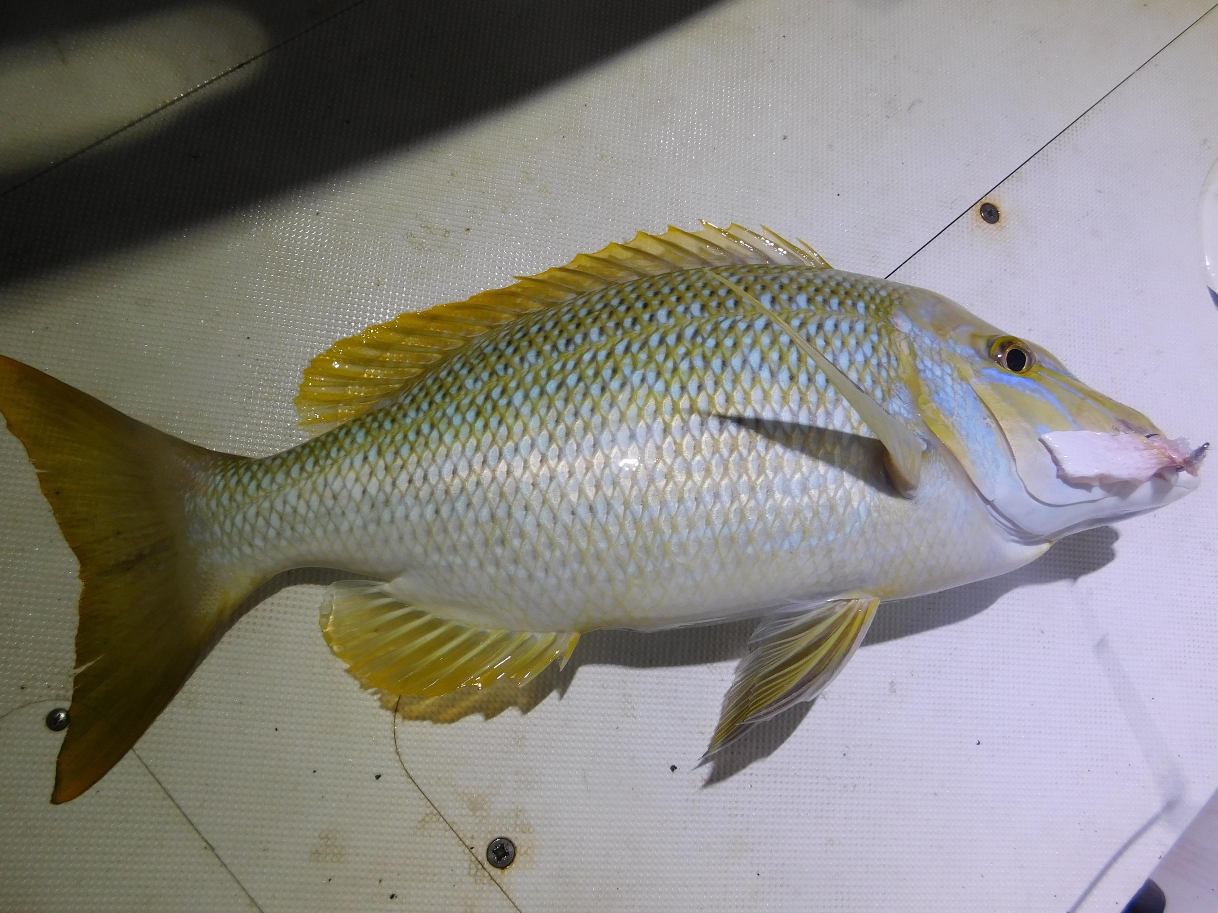 night fish 007.JPG
