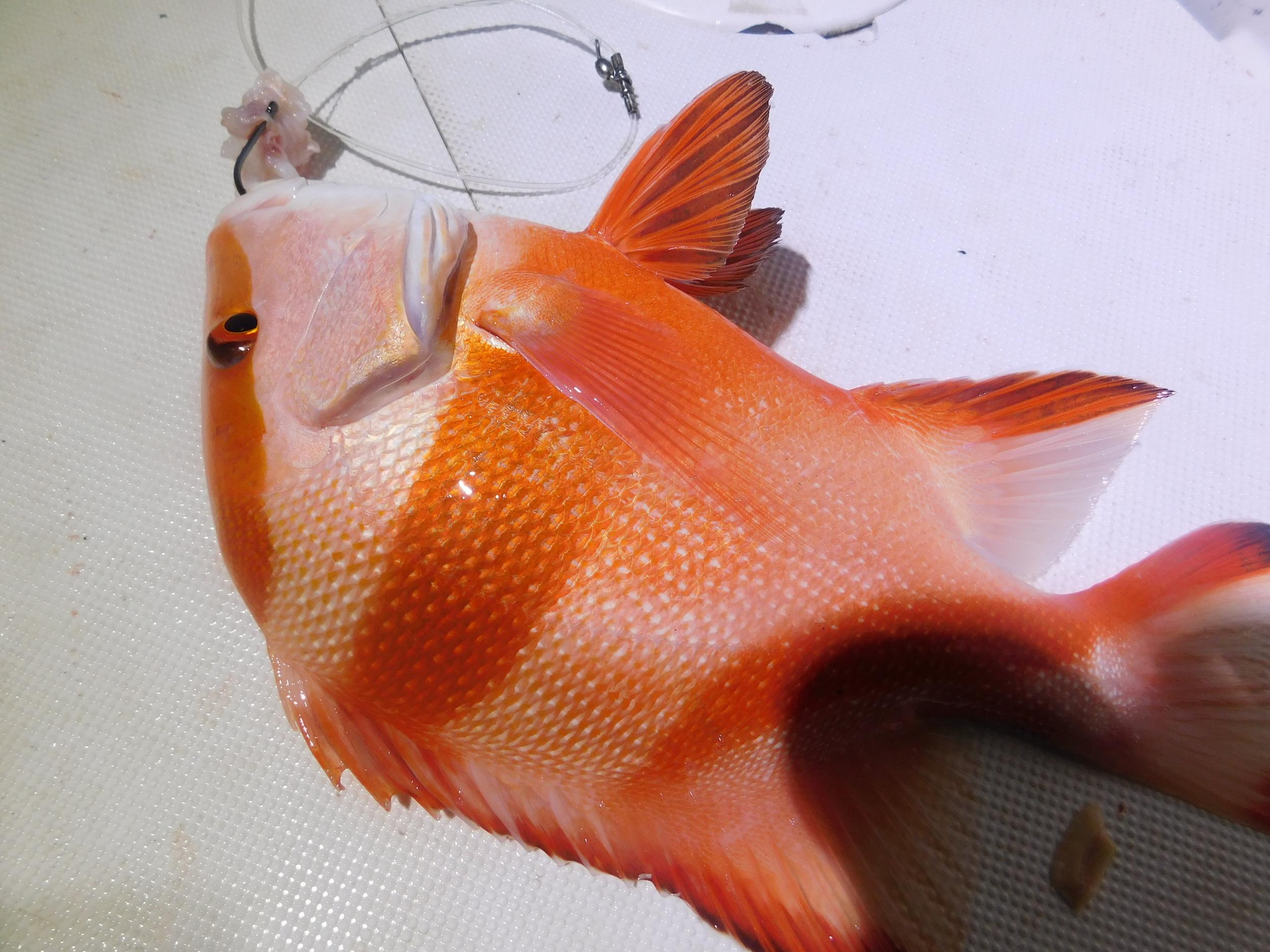 night fish 011.JPG