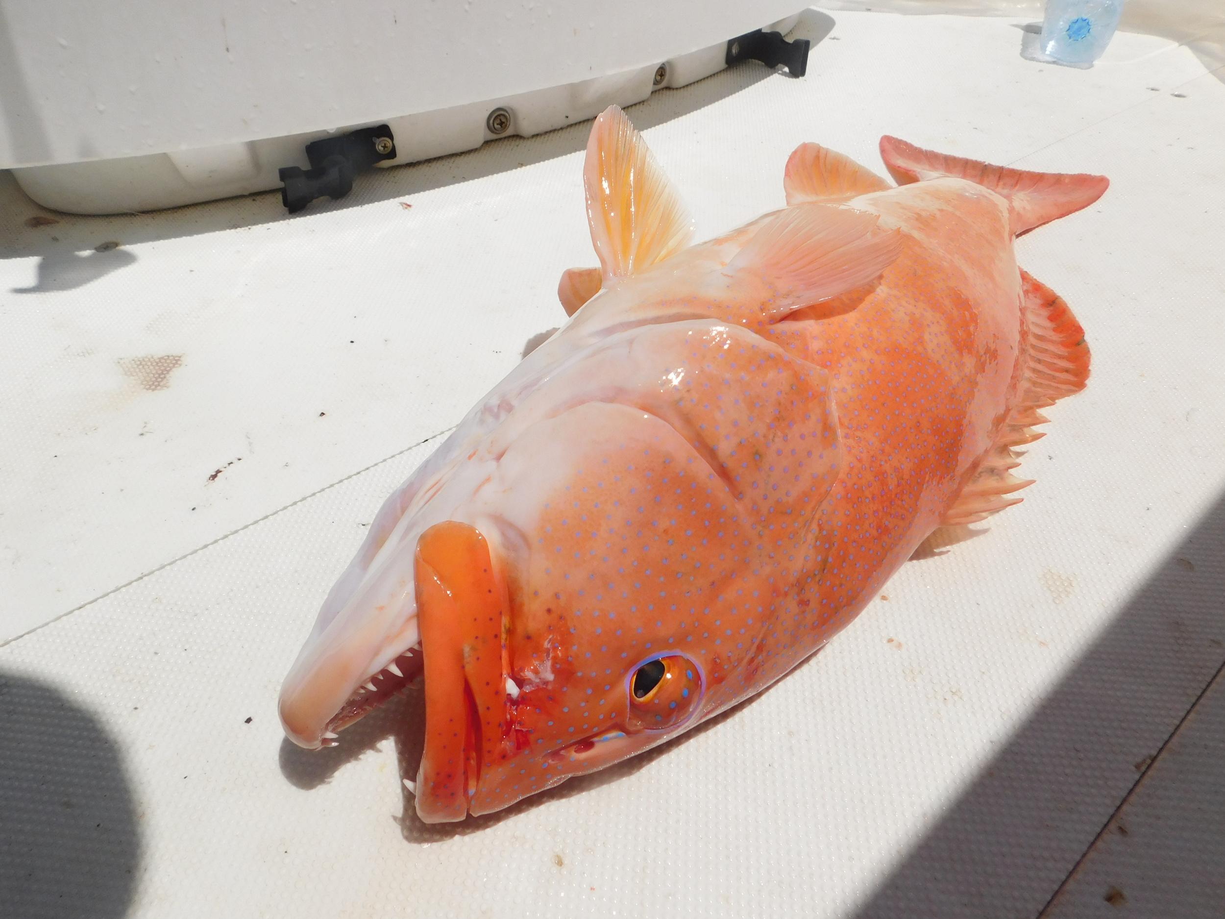 night fish 017.JPG