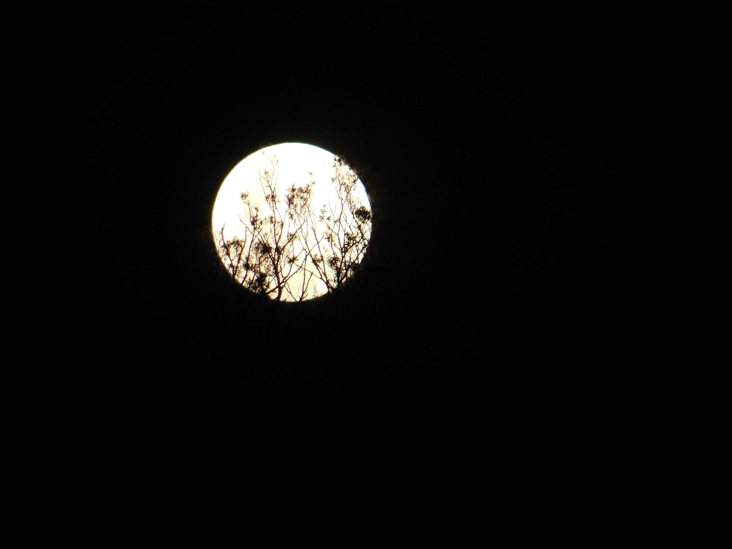 Jewies and moon 048.JPG