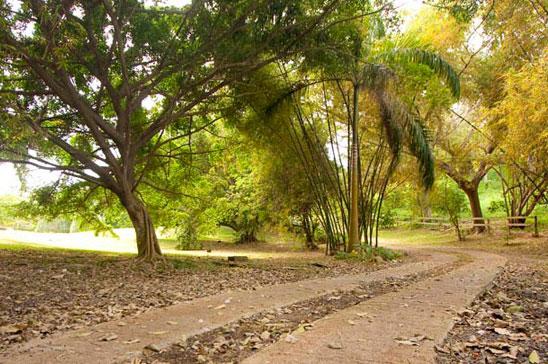 bolt_house_oracabessa_jamaica09.jpg