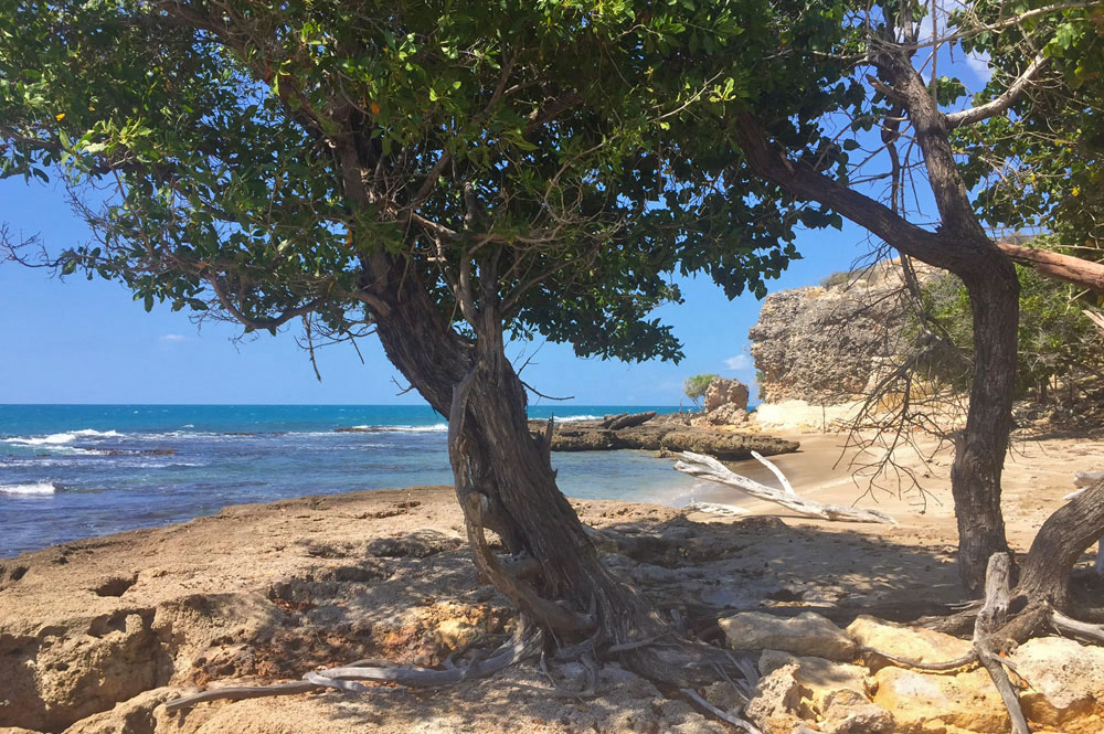 Villa_Arcadia_FortCharles_Treasure_Beach_028.jpg