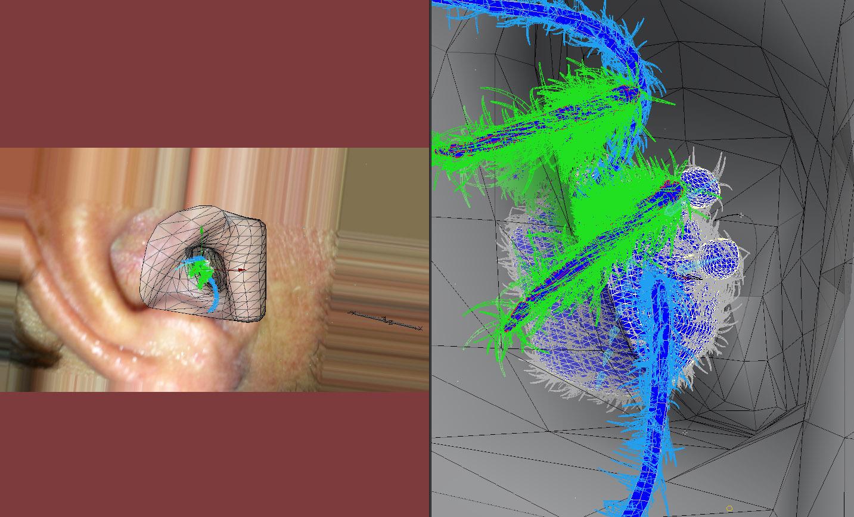 EarSpiderWireFrame.jpg