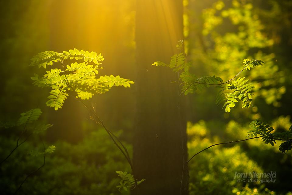 summer_forest_by_nitrok-d3j62pe.jpg