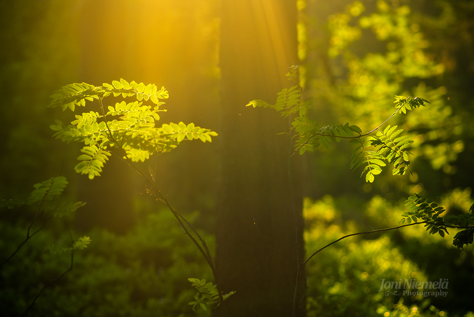 summer_forest_by_nitrok-d3j62pe.jpg