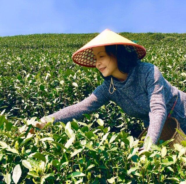 Picking Tea.jpg