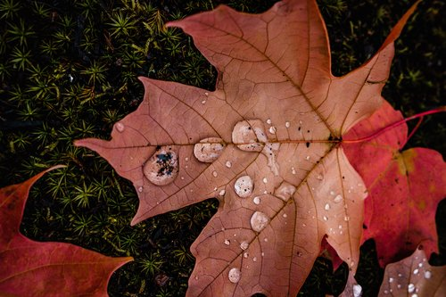 Self-Care in Autumn- A Chinese Medicine Philosophy