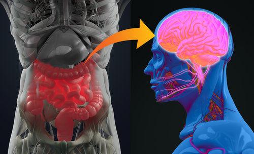 The Relationship Between Emotions and Internal Organs