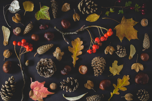 Autumn and the Metal Element