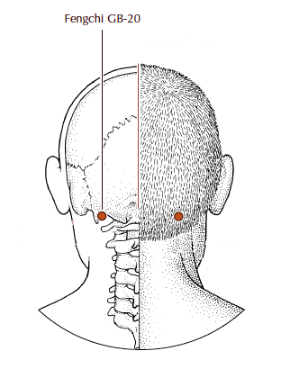 GB 20 - Gallbladder 20, Feng Chi : On the back of the head. Located at the base of the skull in the hollow between mastoid (ear) bone and where the neck muscles attach to the skull. This point can help relieve neck muscle tension and headaches. It's also used at the onset of a cold.