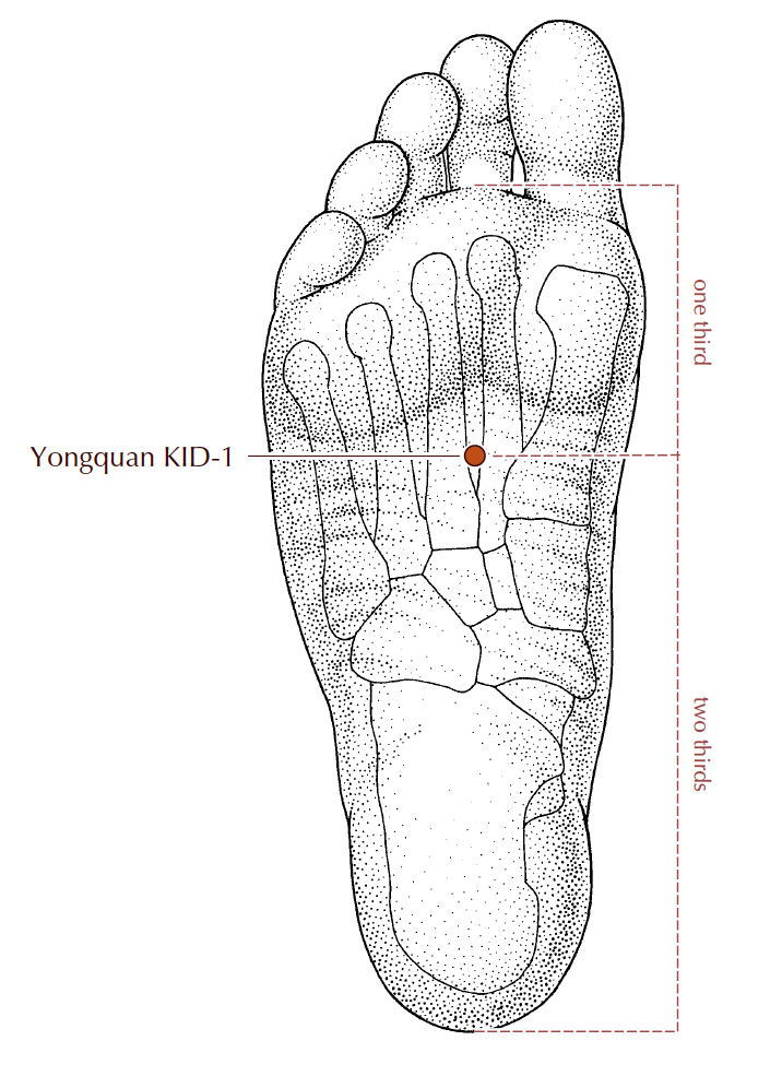 K1 - Kidney 1, Yong Quan : On the sole of the foot, between the 2nd and 3rd toes. Find this point between the ball and arch of the foot. It's actually opposite of Liver 3 on the bottom side of your foot. This point descends excess Qi from the head, calms the spirit, helps with anxiety and insomnia, and has a very grounding effect.