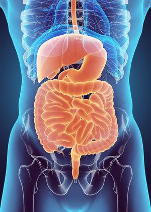 Holistc Approach to IBS