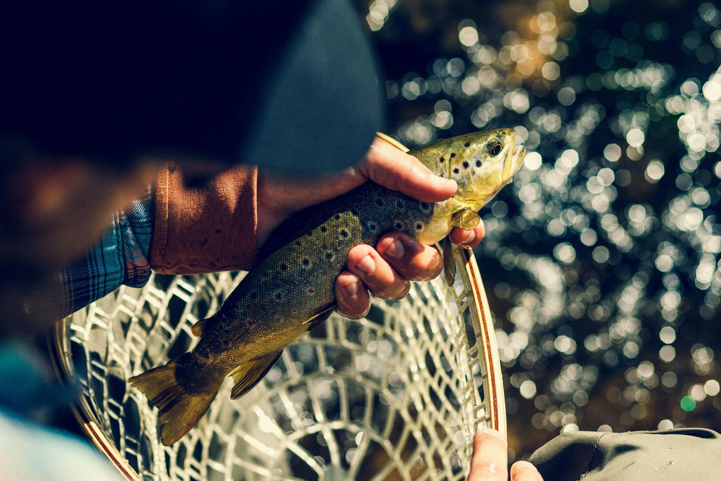 AndrewWhite_CO_Fishing-12.JPG
