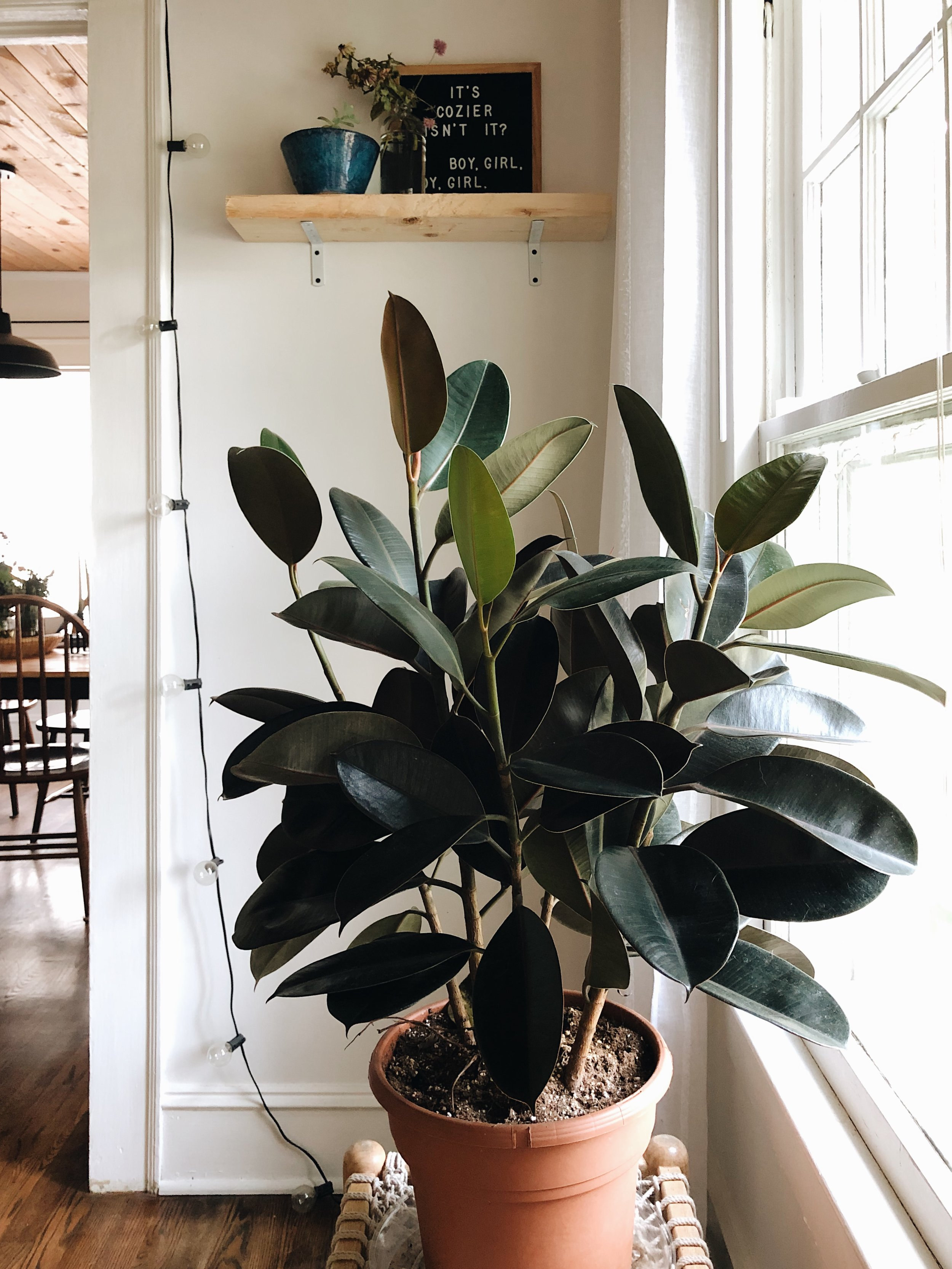 green plant with white walls