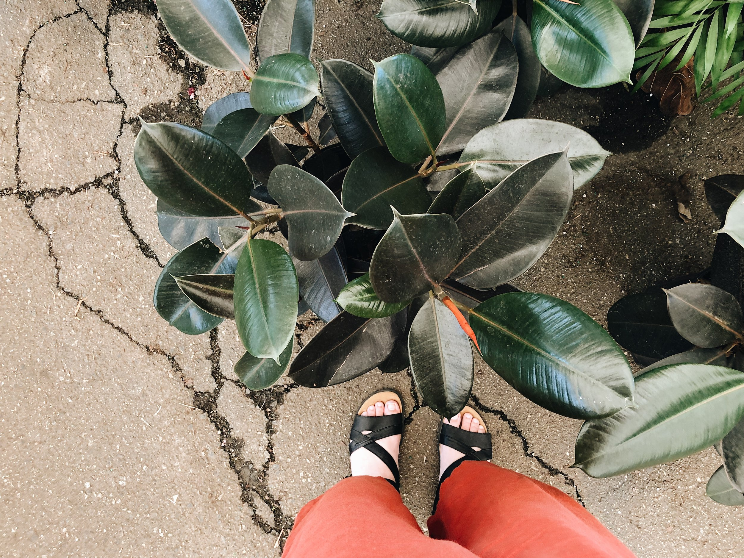 green leaf plant with human feet