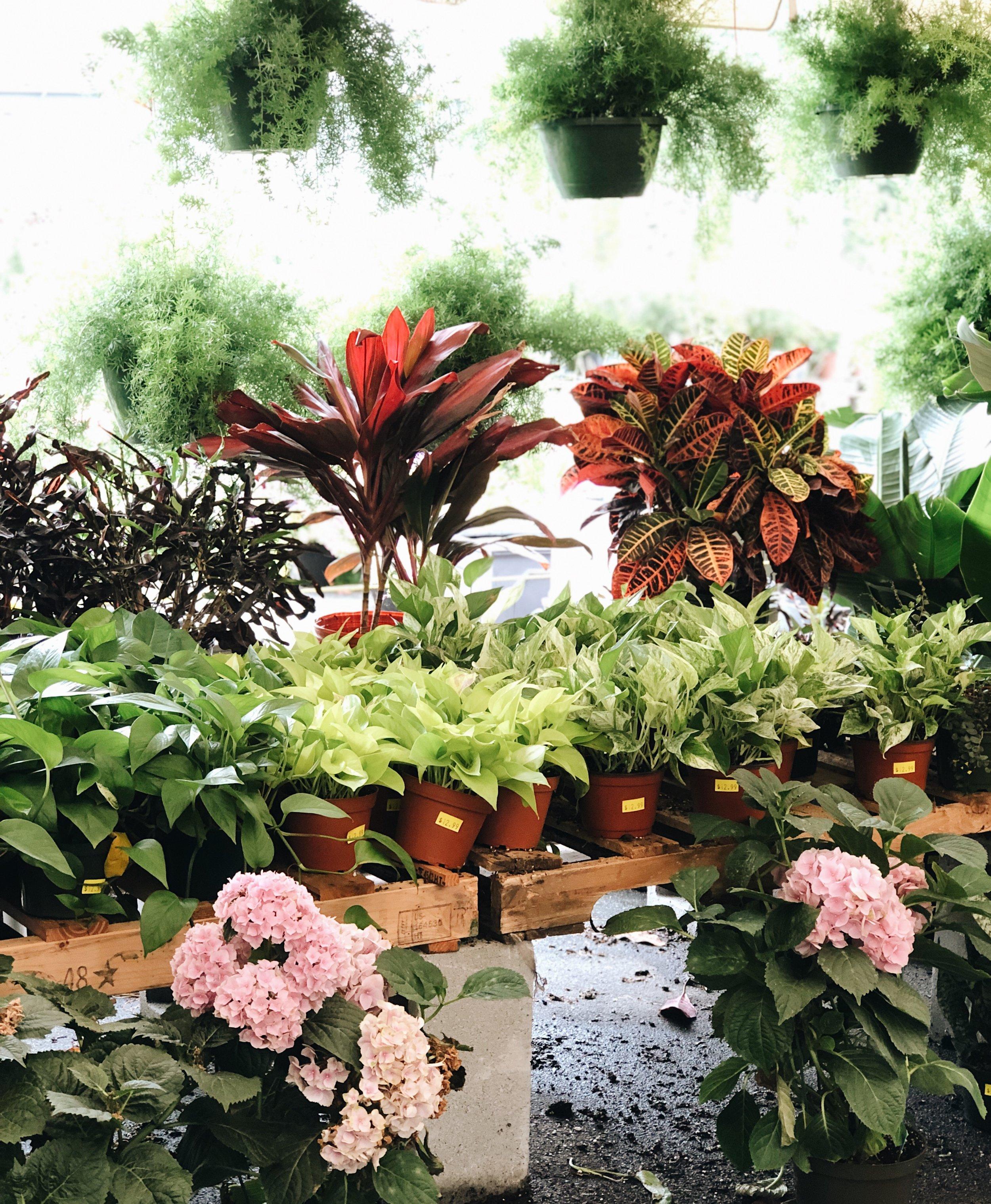 indoor plants at garden center