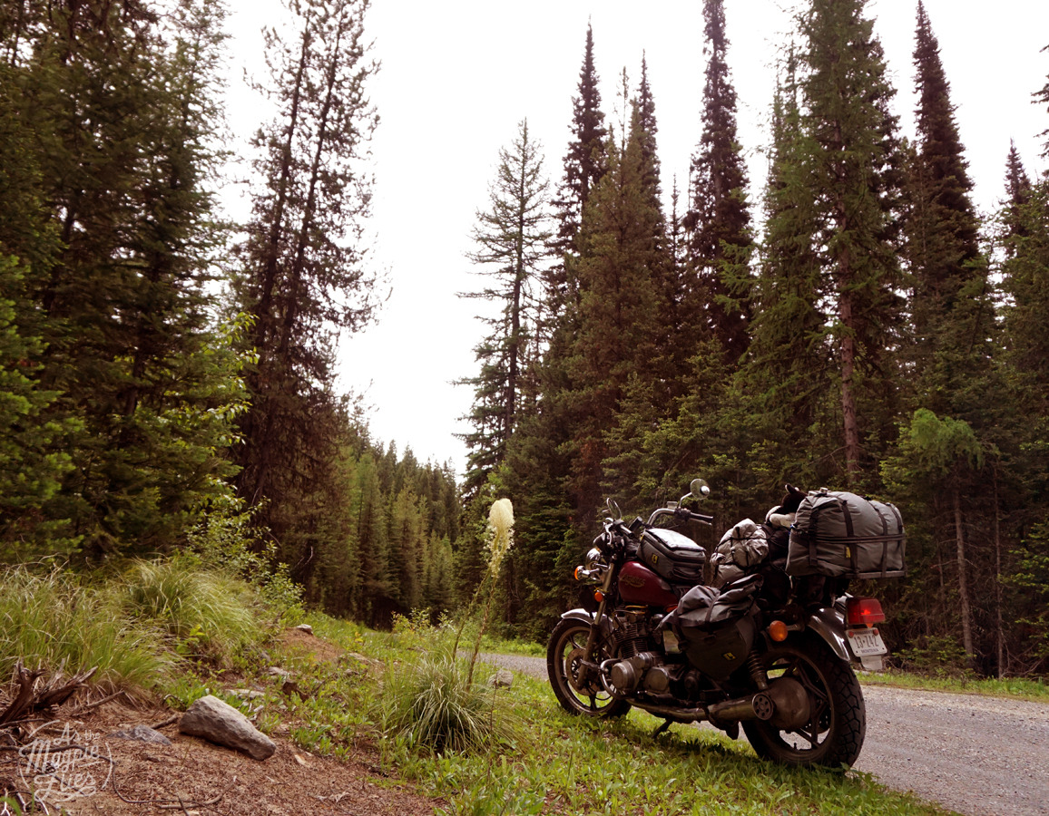 Forest Service Road 763, Olney, MT
