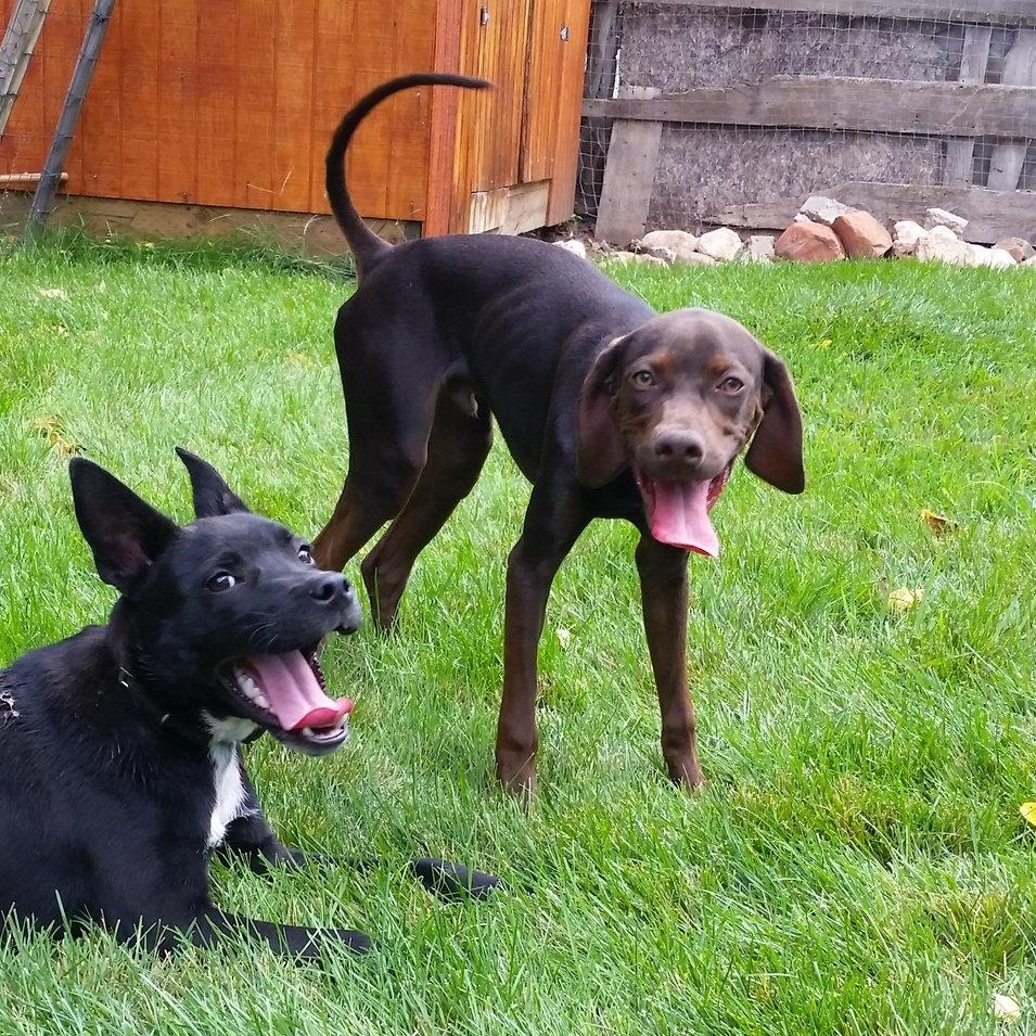 Doggy Daycare & Puppy Training near Provo Utah | Bakers Acres K9 Academy