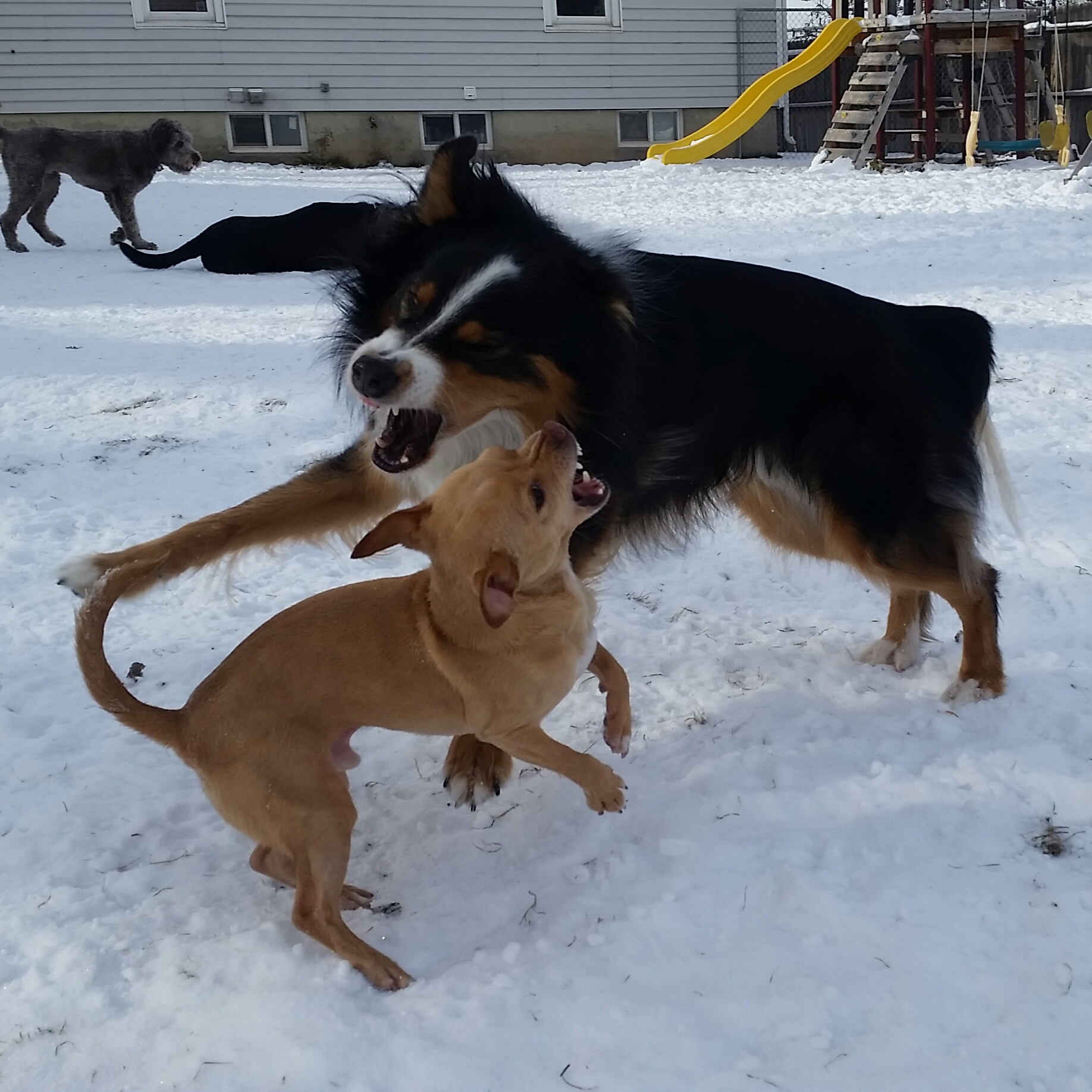 dog-socialization_dog-parks.jpg