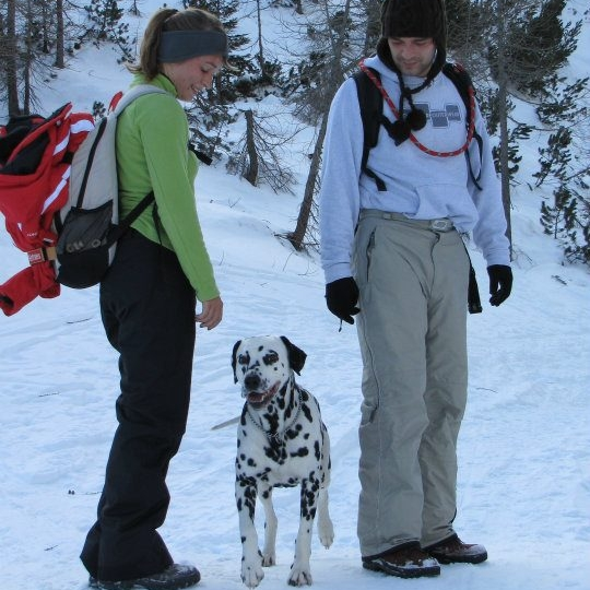 Dalmatian-Dog_training_private-consultations_dog-evaluations