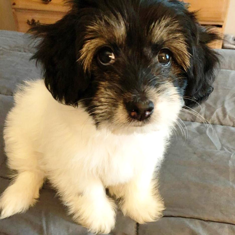 Puppy Training Utah | Bakers Acres K9 Academy
