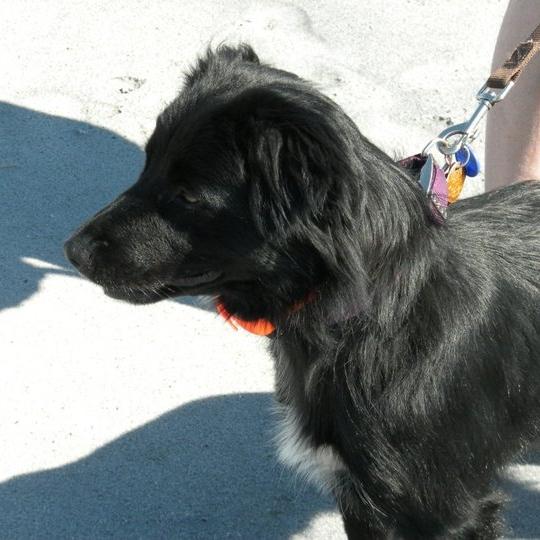 Utah Dog Trainer | Bakers Acres K9 Academy