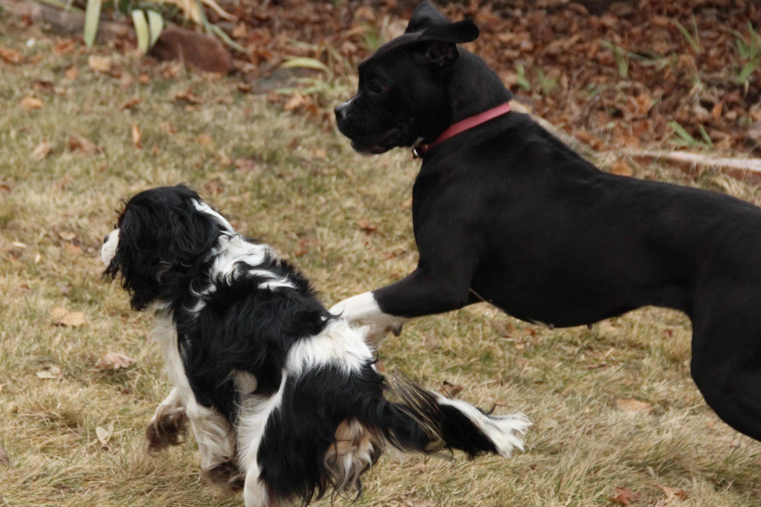 Reliable off leash dog training   Dog Ownership 101   Bakers Acres K9 Academy Blog