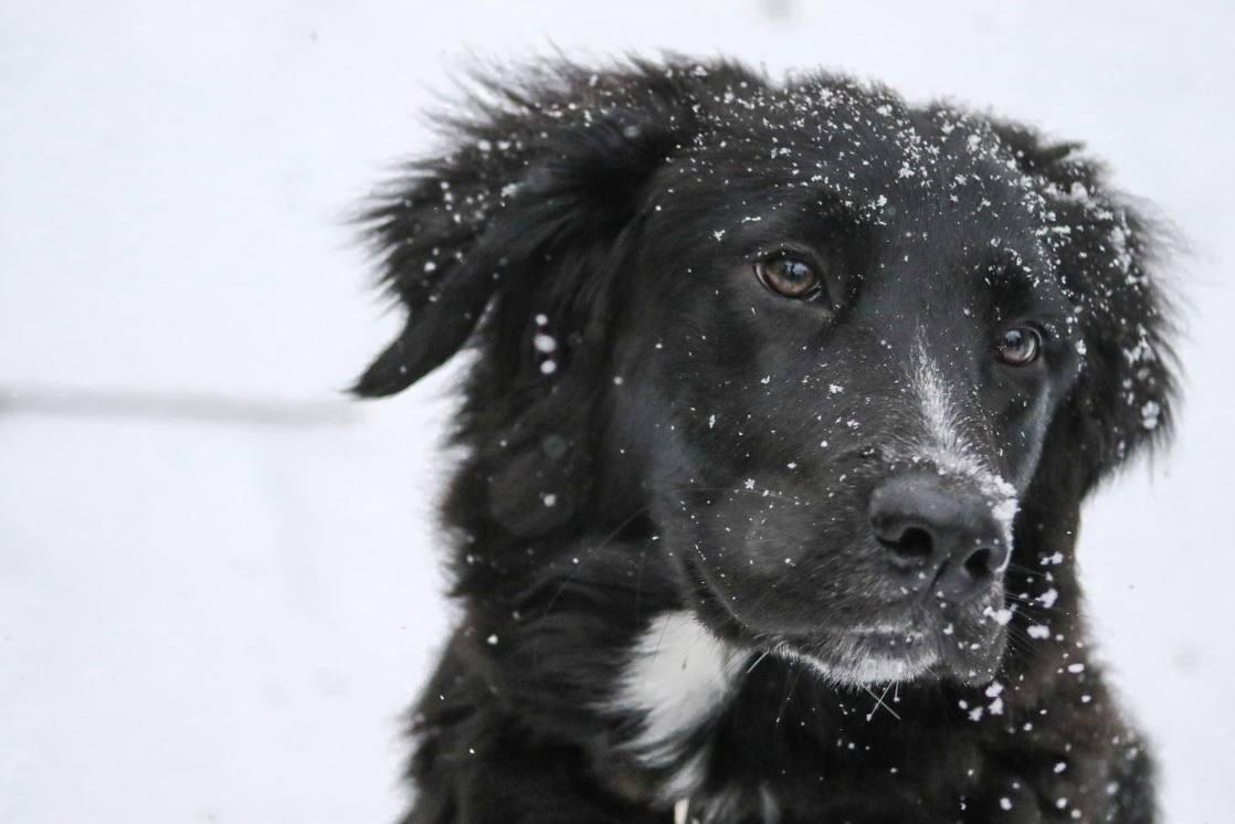 How to keep your pets safe in the winter   Penny Martin - Fureverfriend.info   Dog Ownership 101 Blog   Bakers Acres K9 Academy
