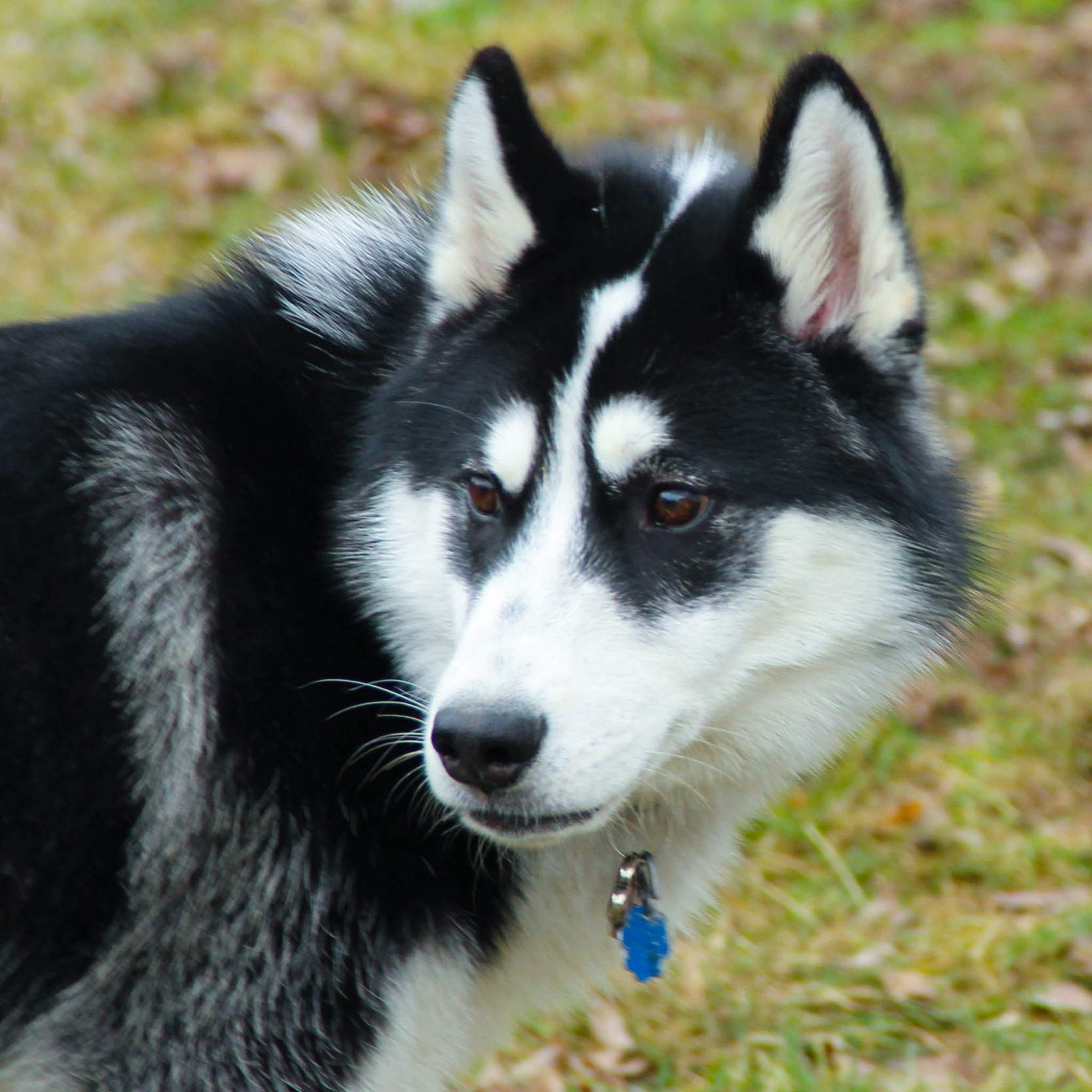 Aggressive Dog Training Utah | Bakers Acres K9 Academy