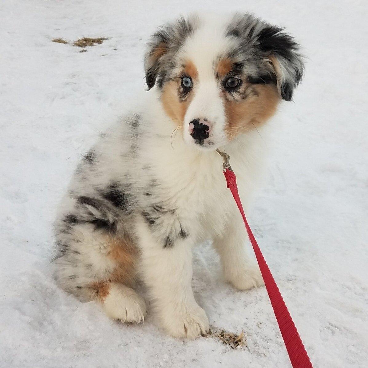 Stop puppy biting | Puppy Training Springville, UT | Bakers Acres K9 Academy