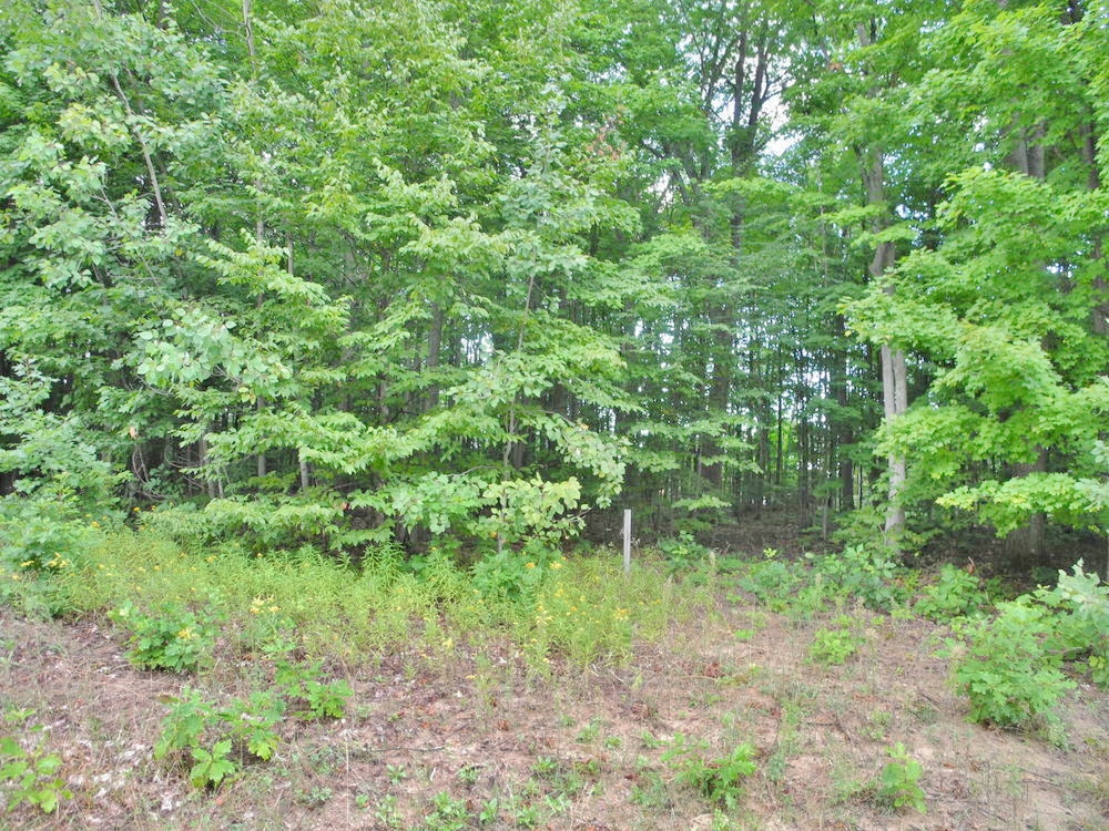 Lot 51, S Monaco Way, Traverse City – 550' Shared Access on West Bay for sale by Oltersdorf Realty LLc (1).JPG