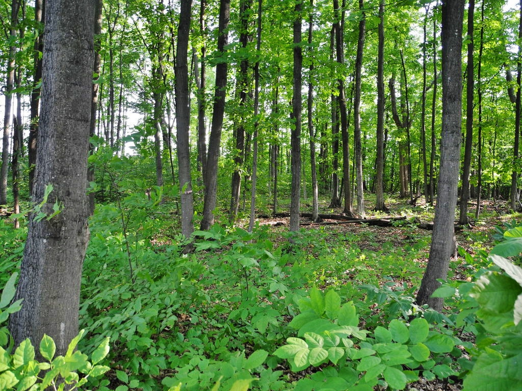 2101 N Our Majestic Trail, Suttons Bay - FOR SALE by Oltersdorf Realty LLC (1).JPG