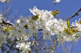 Happy Spring! -