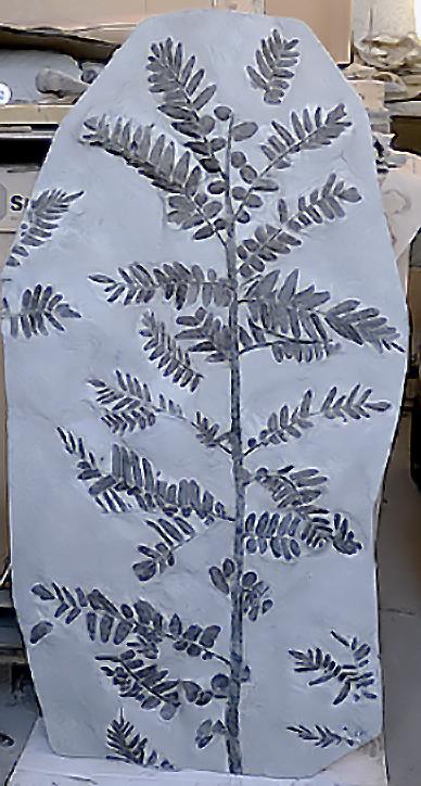 Neuropteris cordata fossil fern