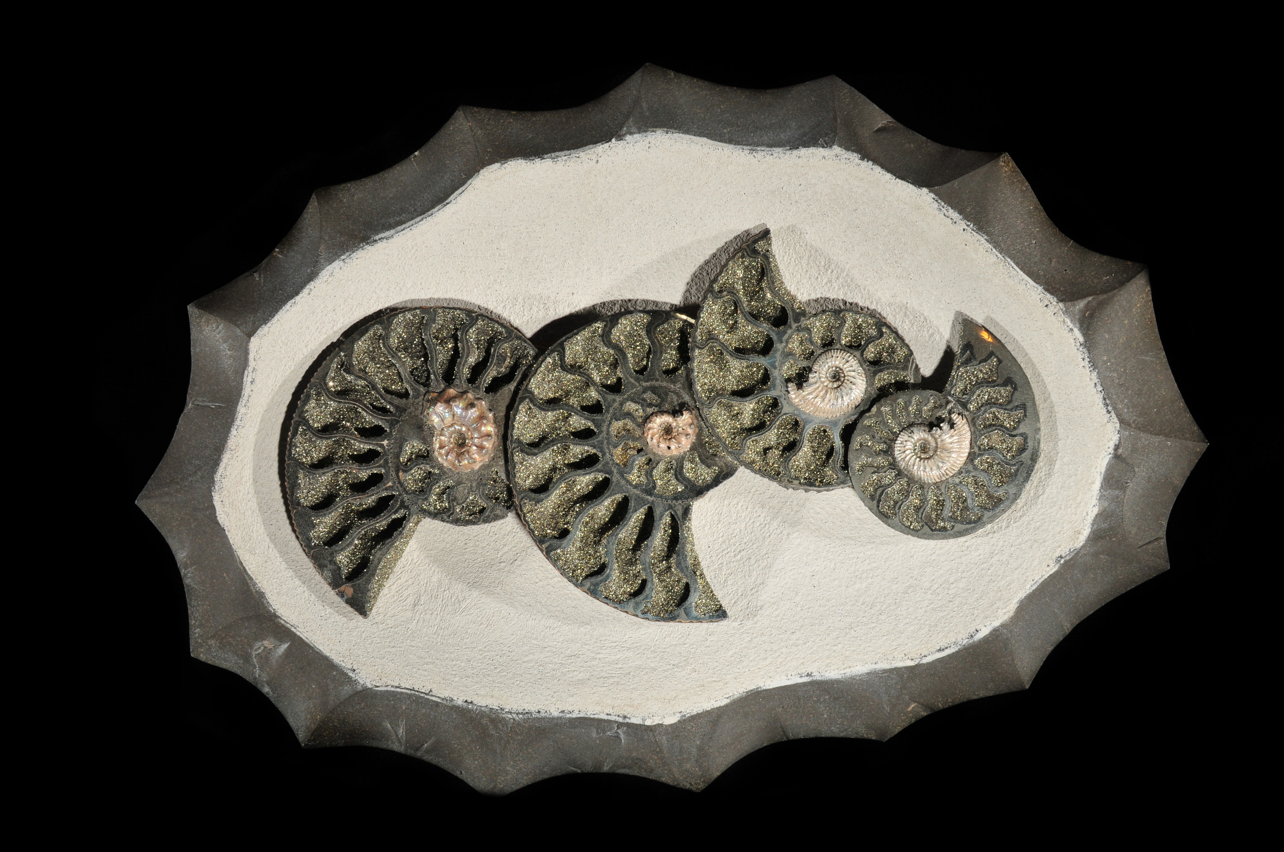 Pyritized Ammonite Cluster