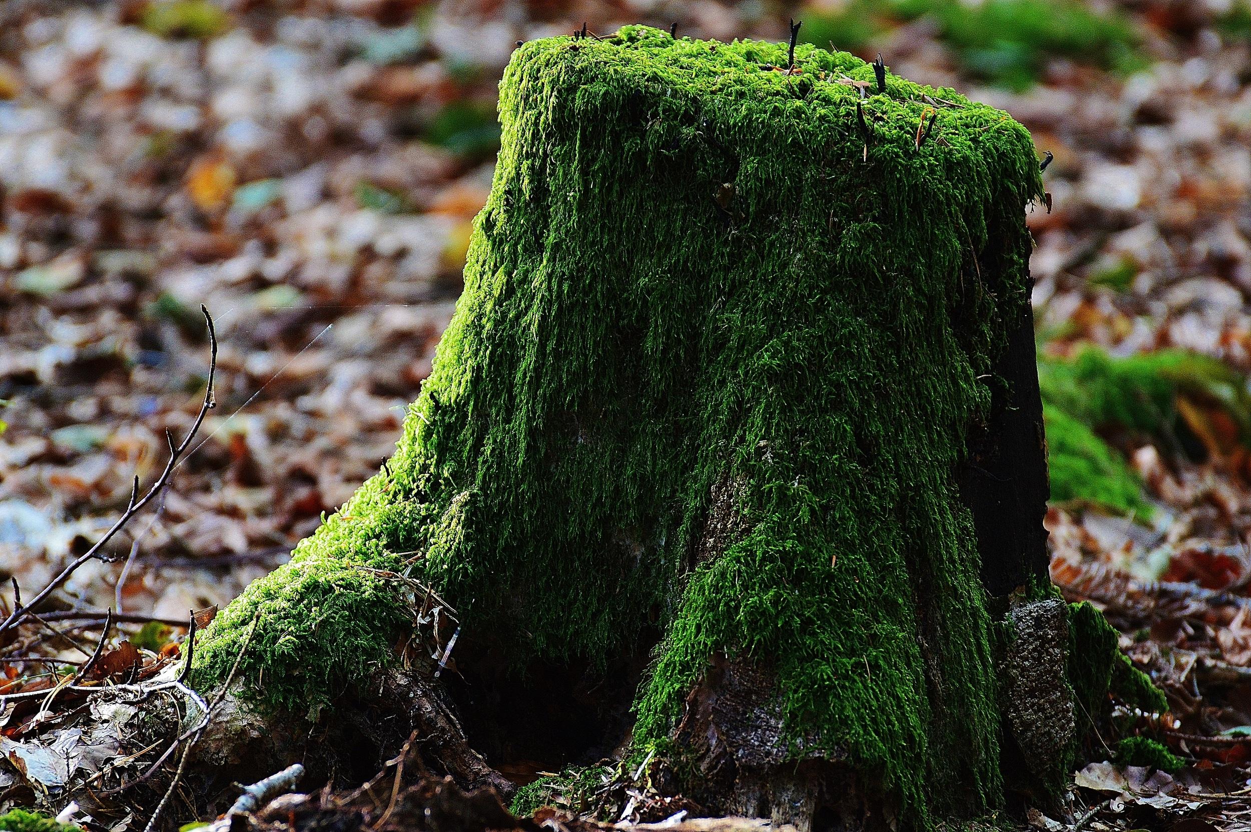 tree-stump-removal.jpg