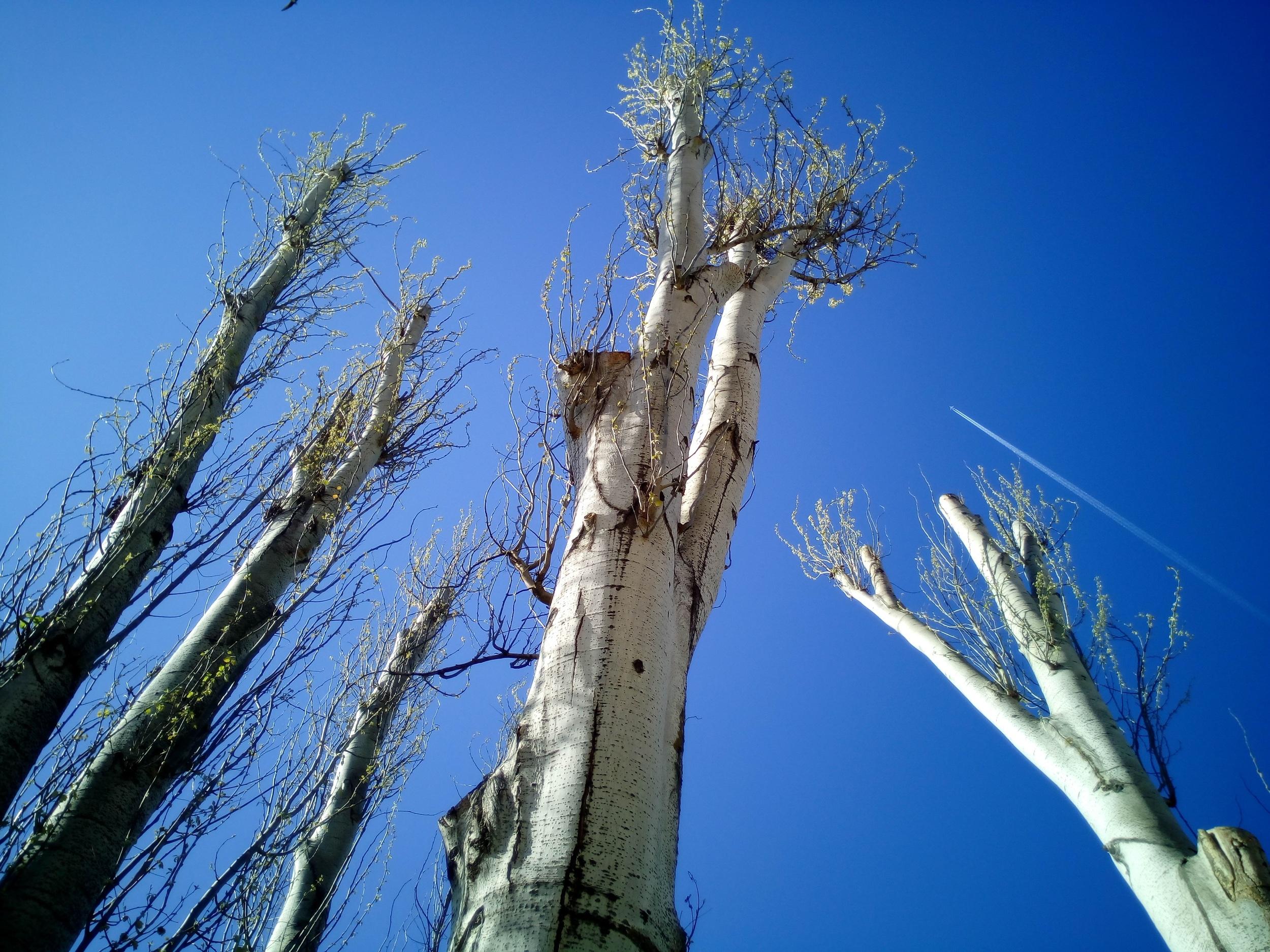 tree-crown-reduction.jpg