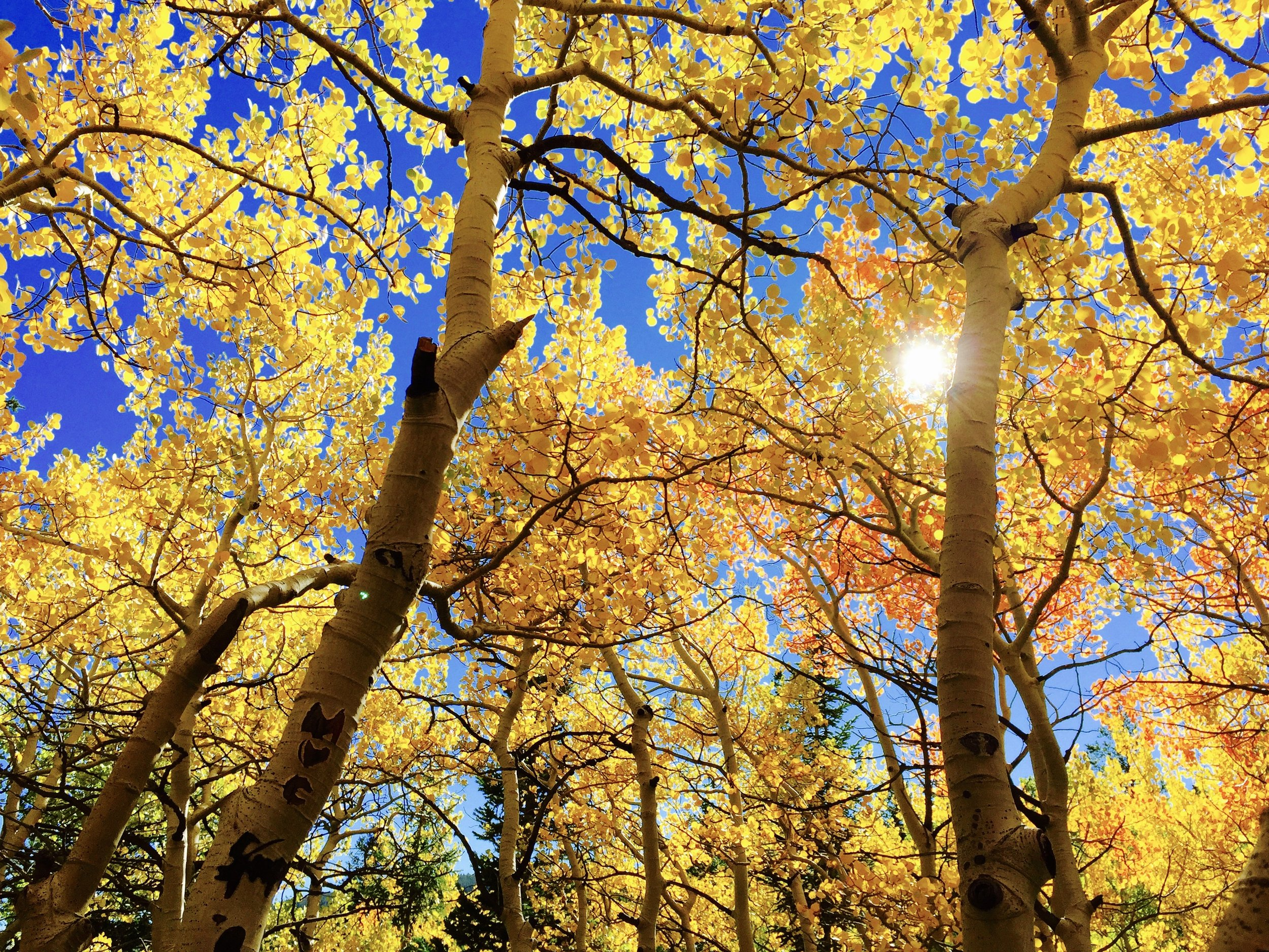 tree-crown-cleaning.jpg