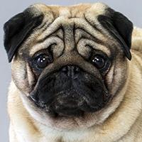 Character: Calvin's Dog Muffe
