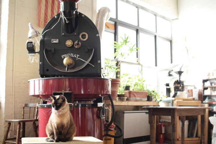 I flagrantly stole this picture of the Probat roaster and cat at Lofted from the Sprudge article. You should go read that article too. Their pictures are way better than mine.
