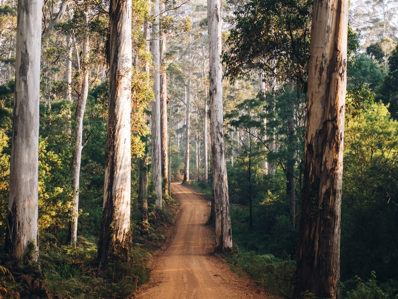 The Great Southern - Manjimup Shire, Western Australia