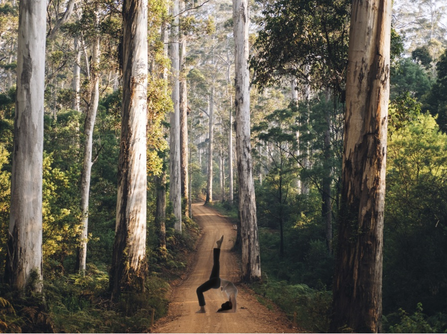 The Best South West, WA has to offer - Our Stunning Location - Shire of Manjimup - Western Australia